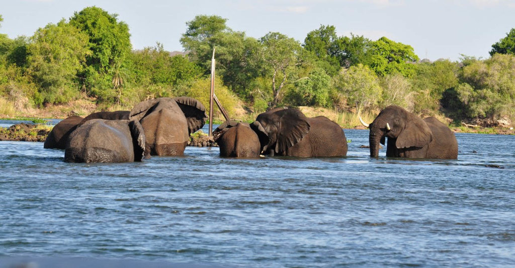 Livingstone Morning Game Drive and River Safari Combo