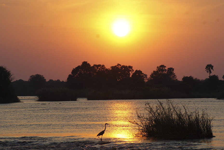 Game Drive and Sunset River Cruise Combo – Bongwe